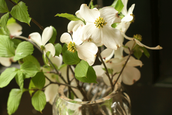 dogwoods-in-the-house