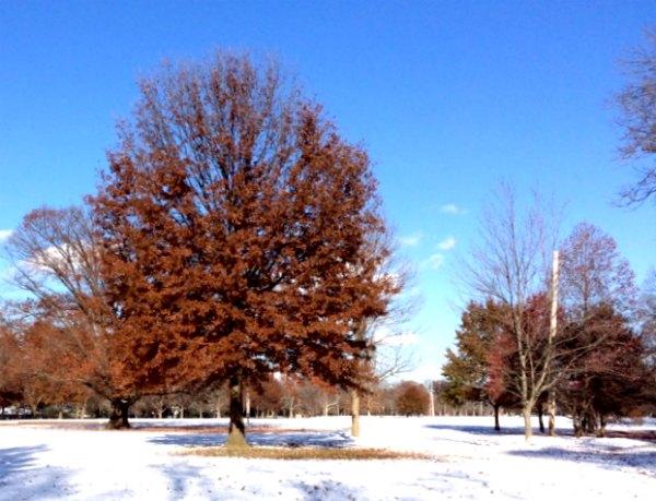 park winter 2