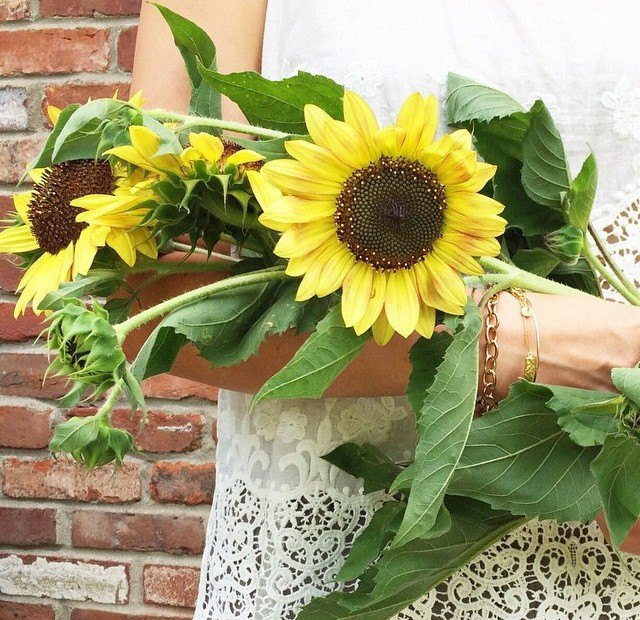 sunflowers and white eylet