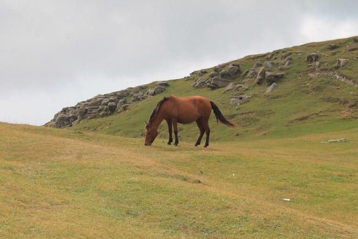 thoroughbred horse