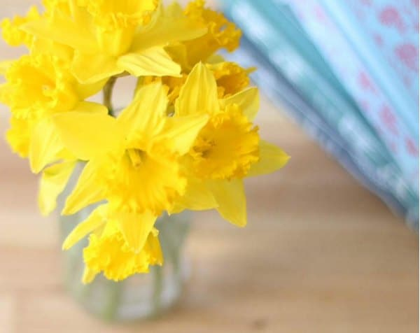 daffodils and jane austen horizontal