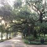 savannah-spanish-moss-forsyth-park