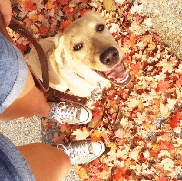 walking the dog (mental health break)