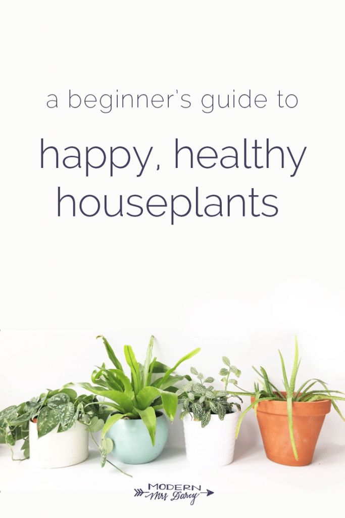 A beginner's guide to happy, healthy houseplants – Modern