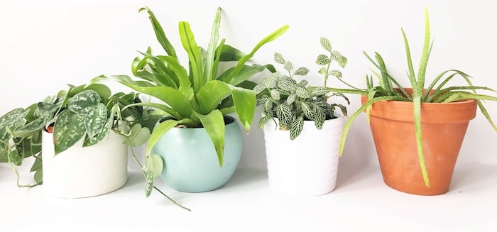 A beginner's guide to happy, healthy houseplants